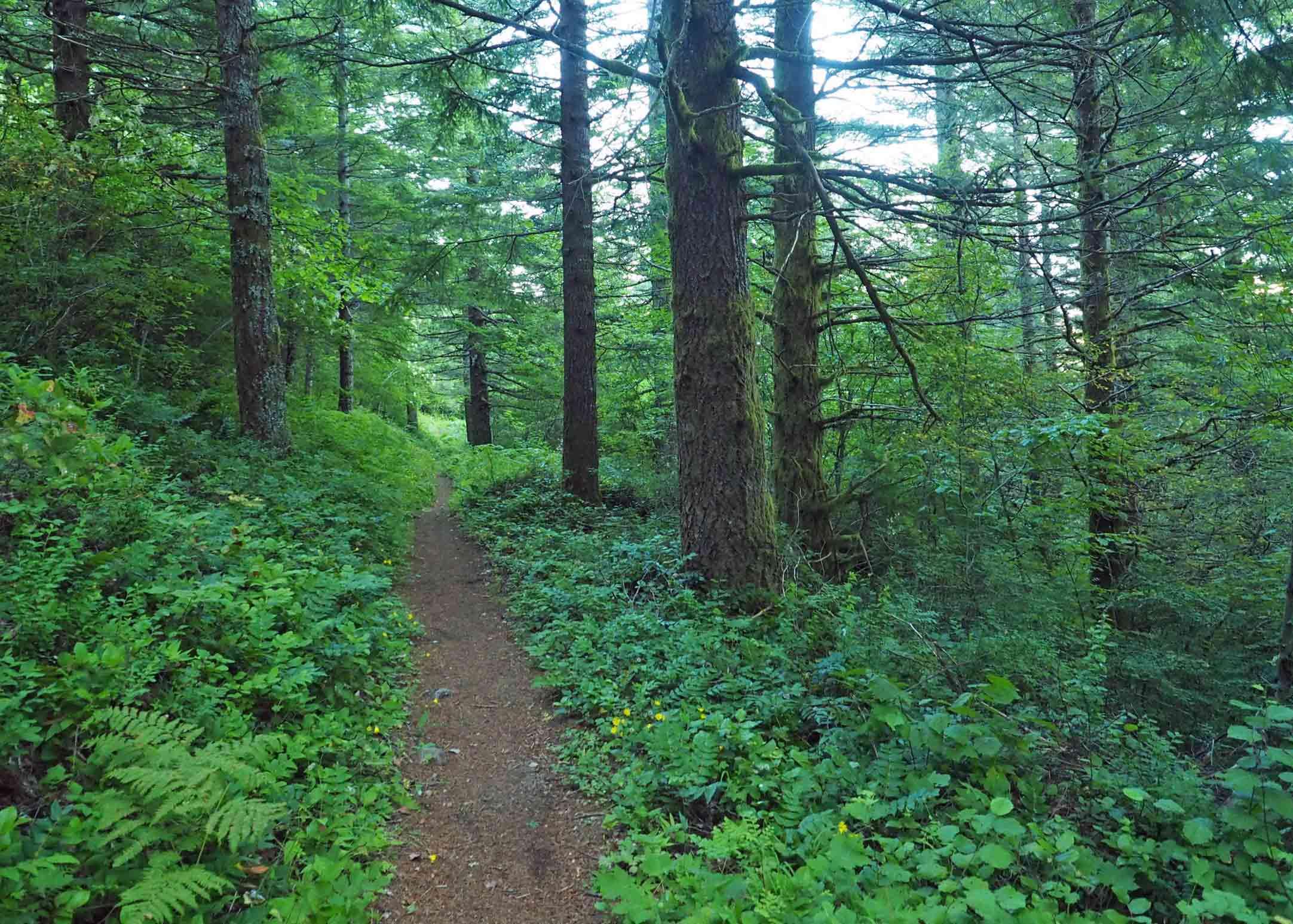 Tarbell Trail